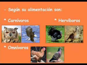Clasificación y características de los vertebrados