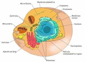 La célula, unidad de estructura y función: unidad de Biología de 2º de Bachillerato (proyecto Biosfera)