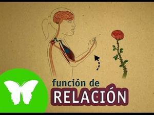 La función de relación. Los sentidos