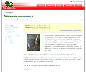 Abadejo (Pollachius pollachius)