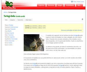 Tortuga boba (Caretta caretta)