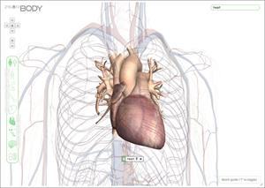 Zygote Body, explora el cuerpo humano en 3D