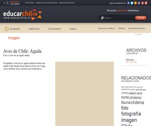 Águila (Educarchile)