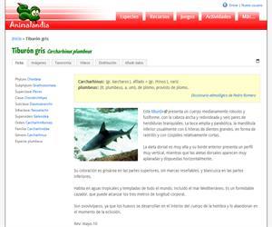 Tiburón gris (Carcharhinus plumbeus)