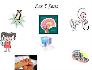 Les 5 sens et l'alimentation