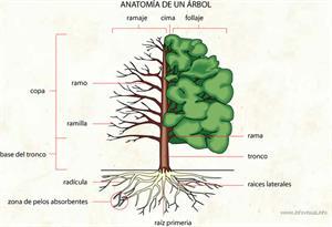 Anatomía de un árbol (Diccionario visual)