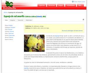 Esponja de red amarilla (Clathrina clathrus)