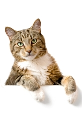 How Important Are Cats' Whiskers?