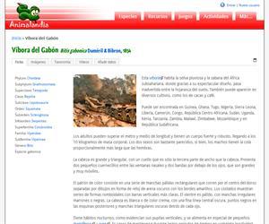 Víbora del Gabón (Bitis gabonica)