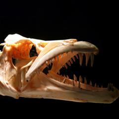 Conociendo el mundo de la Paleontología