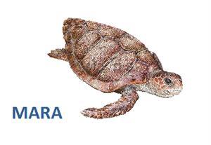 Mara (cuento sobre conciencia ecológica)