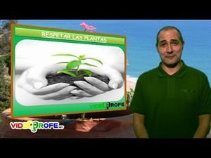 La nutrición de las plantas. (Videoprofe.net)