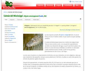Caimán del Mississippi (Alligator mississippiensis)
