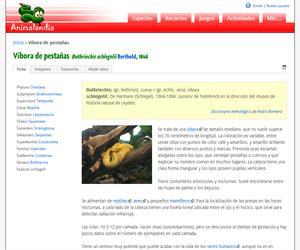 Víbora de pestañas (Bothriechis schlegelii)