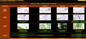 Esquema de las eras geológicas de la Tierra (Historia y biografías)