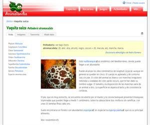 Vaquita suiza (Peltodoris atromaculata)