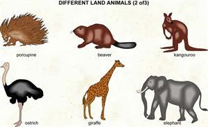 Land animals  (Visual Dictionary)