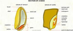 Seed  (Visual Dictionary)