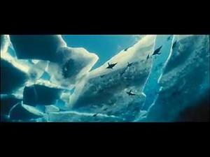 Océanos: las especies marinas