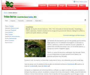 Tritón ibérico (Lissotriton boscai)
