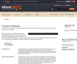 Tortuga accidentada (Educarchile)