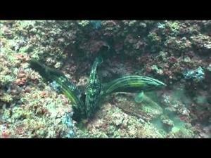 El mar a fondo: Los peces