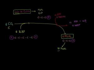 Fotosíntesis ciclo de calvin (Khan Academy Español)