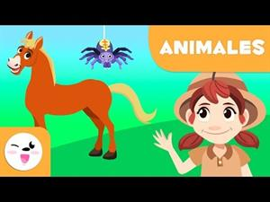 Los animales vertebrados e invertebrados.