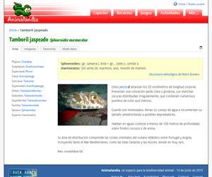 Tamboril jaspeado (Sphoeroides marmoratus)
