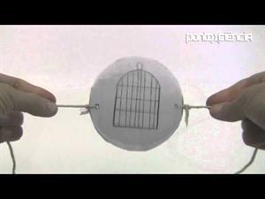 Persistencia de la visión y fusión de imágenes en el cerebro (Pontociência)