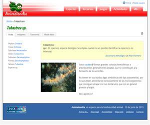 Tubastrea (Tubastrea sp)