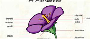 Fleur (Dictionnaire Visuel)