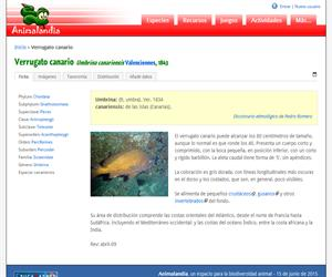 Verrugato canario (Umbrina canariensis)