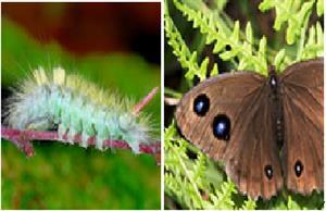 Las mariposas (asturnatura.com)