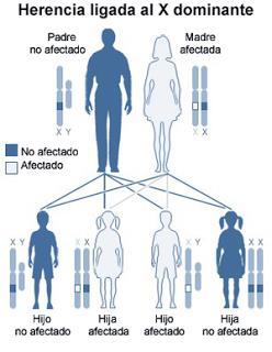 La herencia genetica. Biología y geología de 4º de Secundaria (pdf)