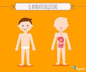 Cuerpo humano - aparato digestivo