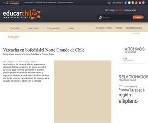 Vizcacha en bofedal del Norte Grande de Chile (Educarchile)
