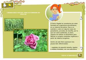 Determinar un vegetal. Biología y Geología para 3º ciclo de Primaria