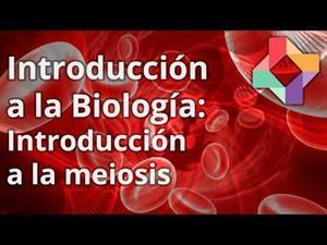 Introducción a la meiosis