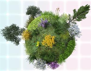 El fascinante mundo de las plantas. 1º ESO (Proyecto CREA)