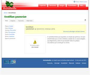 Veretillium (Veretillium cynomorium)