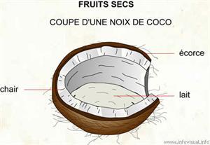 Noix de coco (Dictionnaire Visuel)