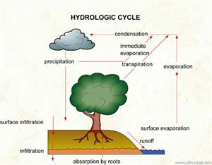 Hydrologic cycle  (Visual Dictionary)