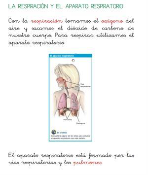 La respiración, excreción y circulación