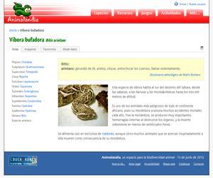 Víbora bufadora (Bitis arietans)