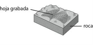 Pregunta liberada TIMSS-PIRLS de geología sobre edad de un fósil. Problemas de geología IV