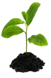 Do Plants Experience Pollution? Will Plants Grow More or Less or be Unaffected when Grown in Polluted Soil?
