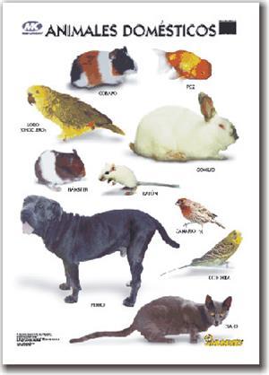 Crucigrama de Animales Domésticos (palabras amigas)