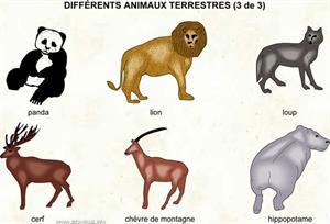 Animaux (Dictionnaire Visuel)