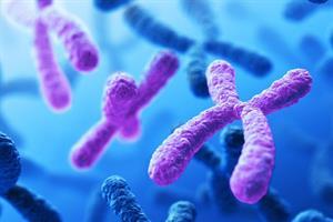 Los telómeros y el envejecimiento